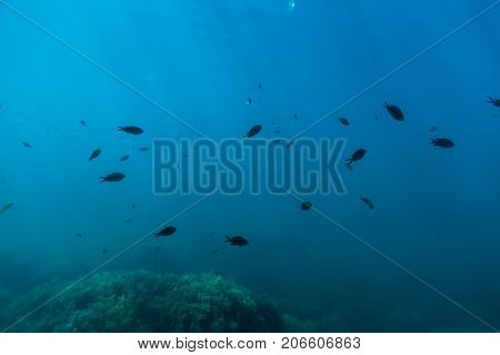 Group of black fish and sun rays in underwater. Wild life in sea
