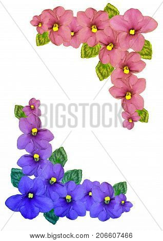 Bouquet of colorful flowers of violets isolated on white background