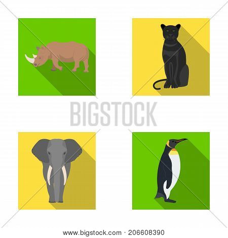 Black rhinoceros, panther wild cat, African animal elephant, imperial penguin. Wild animals set collection icons in flat style vector symbol stock illustration .