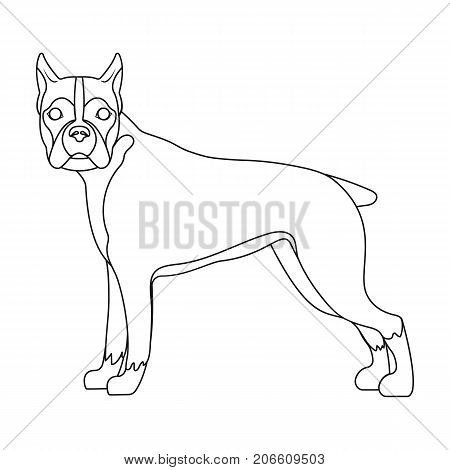 Boxer, single icon in outline style.Boxer, vector symbol stock illustration .