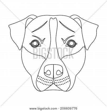 Dog breed, Stafford.Muzzle of Stafford single icon in outline style vector symbol stock illustration .