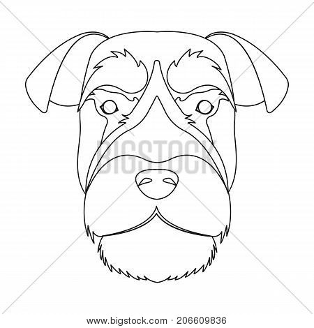 A breed of a dog, a risen schnauzer.Risen Schnauzer Muzzle single icon in outline style vector symbol stock illustration .