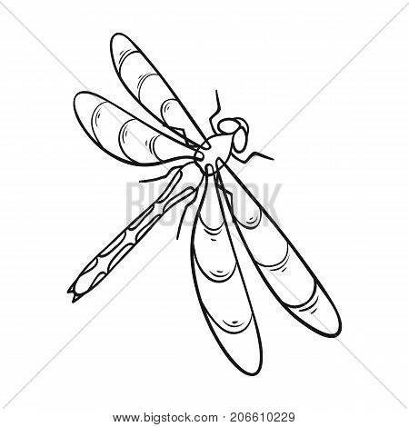 A dragonfly, a predatory insect.Dragonfly flying invertebrate insect single icon in outline style vector symbol stock isometric illustration .