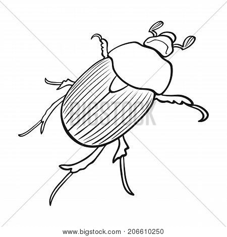 Beetle is a coleopterous insect.Arthropods insect, beetle single icon in outline style vector symbol stock isometric illustration .