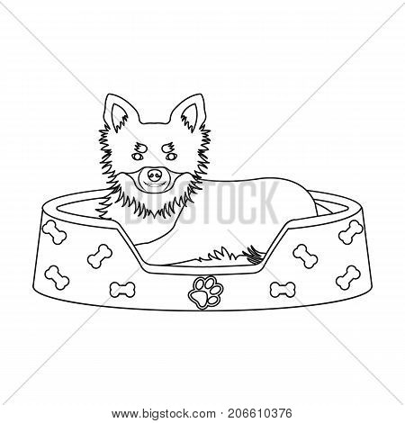 Lounger for a pet, a sleeping place. Dog, care of a pet single icon in outline style vector symbol stock illustration .