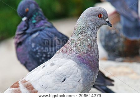 Pigeons among the cityscape. Pigeons are sitting in the city park.