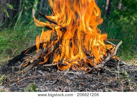 Campfire burning in the forest in summer