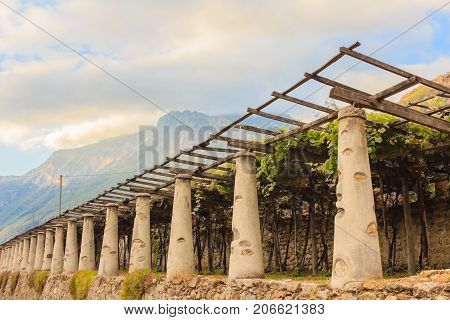 the typical agricultural architecture of the vineyards of Carema, in Piedmont, Italy /pylons stone and lime columns and chestnut poles support the pergola of rows of grapes
