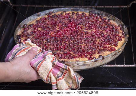 Homemade Organic Cranberry Pie Dessert Ready To Eat. Cranberry Tart.