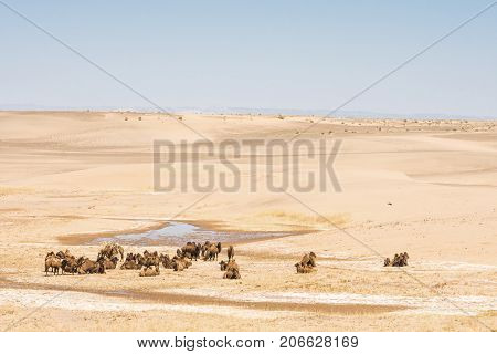 panoramic view of camels near little oasis in sunlit desert