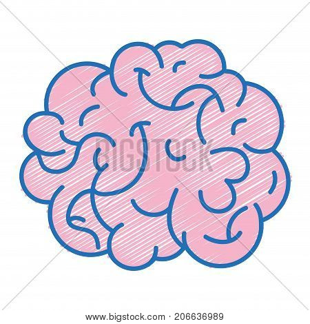 human brain anatomy to creative and intellect vector illustration