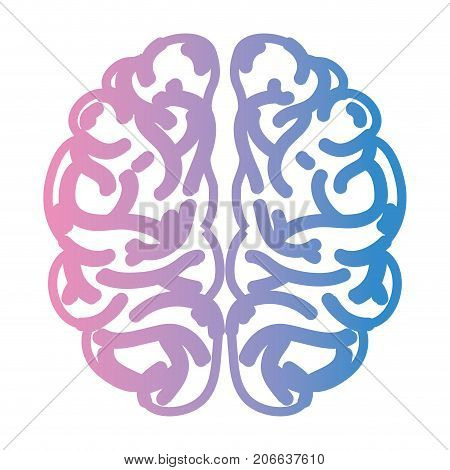 line human brain anatomy to creative and intellect vector illustration