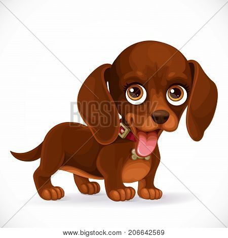 Little cute brown dachshund puppy isolated on white background