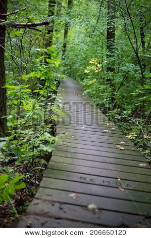 Footbridge in forest for hiking and mountain biking