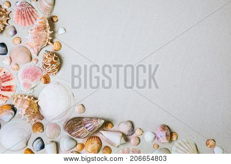 Sea shell on the white sand. Beach summer background