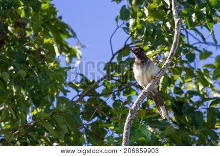 Tropical Bird In Costa Rica