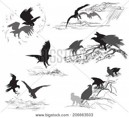 Set of vector cut out scenes of eagle silhouettes in black color on white background. Relationship of eagles