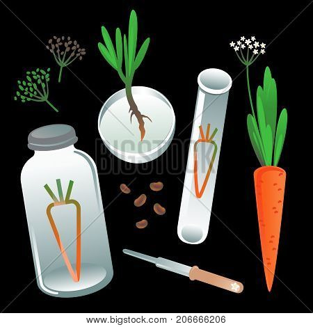 Botanical set: test tube, jar, pipette, carrot, seeds, sprout.
