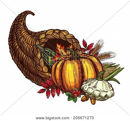 Thanksgiving Day cornucopia and autumn harvest sketch. Vector isolated symbol of seasonal vegetable, fruit and berry food, maple or oak leaf for traditional Thanksgiving holiday greeting card template
