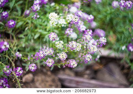 Autumnal Flowers In A Garden