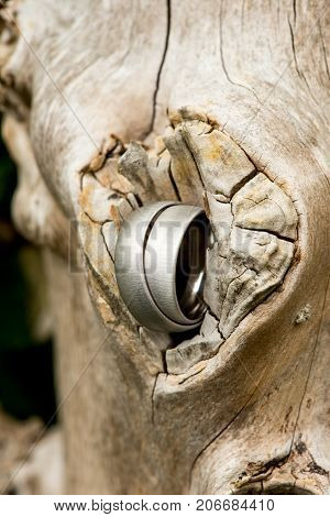 View of a pair of white golden wedding rings connected to nature