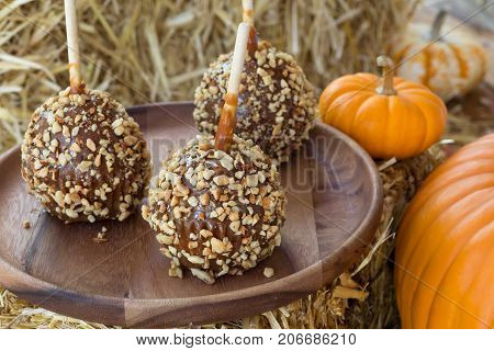 Caramel apples coated with nuts on a wooden plate with pumpkins