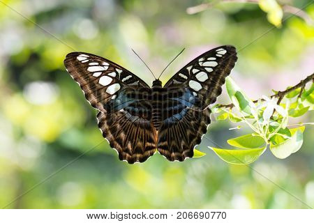 Butterfly Close Up