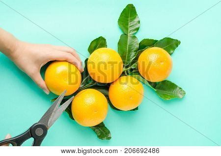 Fresh Navel oranges fruit on green background,harvest concept
