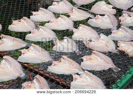 Fresh Fish On Plastic Net Under Sun Light For Make Dried Fish..