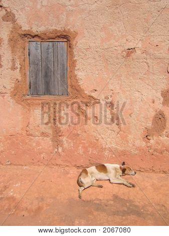 Dog Sleeping Along A House Wall,