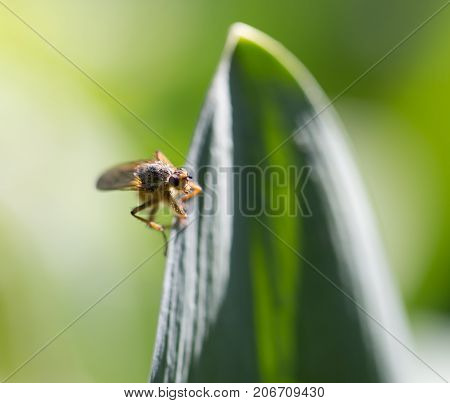 fly on a leaf. macro . In the park in nature