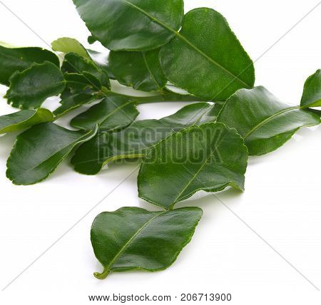Kaffir lime leaves on white background spices, nature, green, food, healthy,
