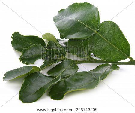 Kaffir lime leaves on white background leaf, isolated, herb,