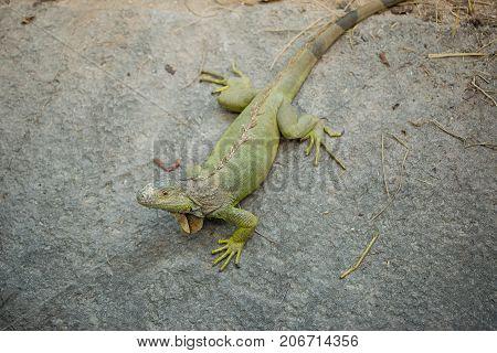 Chameleon grasp on stone