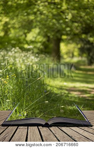 Lovely Shallow Depth Of Field Fresh Landscape Of English Forest And Countryside In Spring Sunshine C