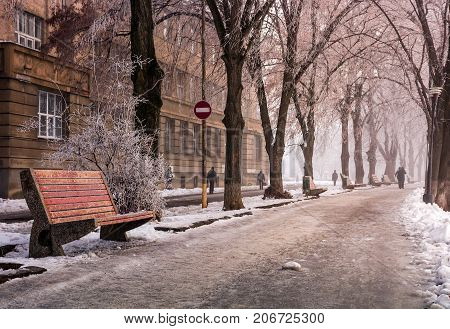 Bench On Longest Linden Alley In Winter