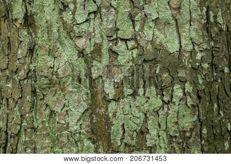View on a natural Tree Bark Texture. Clsoe-up of a Tree Bark in the Forest. Natural Nature Backgrounds. Natural Textures and Patterns