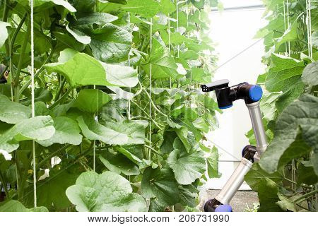 smart robotic in agriculture concept robot farmers (automation) must be programmed to work in the vertical or indoor farm for increase efficiency growing a seed harvesting monitoring insect or bug