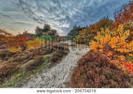 Colorful Autumn Heathland Landscape