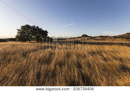 Morning view of tall grass meadow at Santa Susana Pass State Historic Park in the San Fernando Valley area of Los Angeles, California.