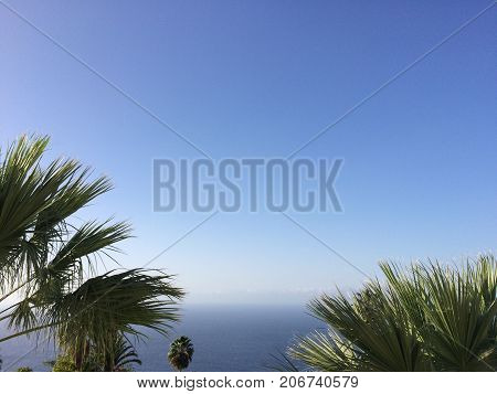 Ocean, Palm Trees And Blue Sky   Copy Space