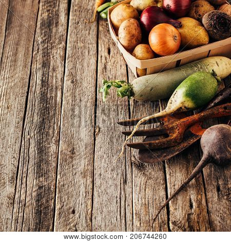 Fresh produce potatoes onions beets carrots. Different vegetables.