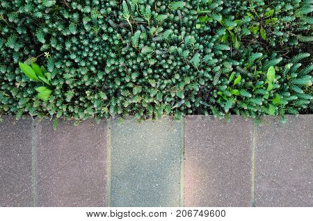 Gray Pavement and Grass Lawn in Garden Decorative Texture