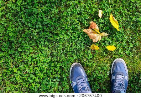 Blue sneakers on a green grass with fallen leaves top view. A view from the first person under the feet to autumn green grass and yellow fallen leaves. Autumn Approach Season Change Concept