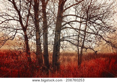 Autumn landscape in cloudy autumn weather. Bare November autumn trees in the fog. Colorful autumn landscape. Autumn trees in the fog. Cloudy autumn nature view of autumn forest