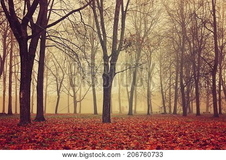 Autumn park in dense autumn fog. Autumn foggy landscape with bare autumn trees and fallen red autumn leaves. Mysterious autumn landscape scene in foggy autumn weather