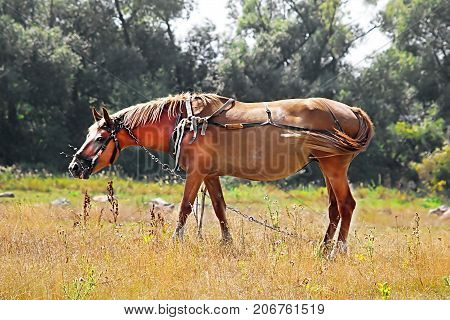 Nice brown horse in the meadow in the summer