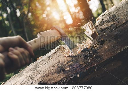 Woodcutter Holds Ax In His Hands And Chops Down Fallen Tree In Forest, Wood Chips Fly Apart. Sunligh