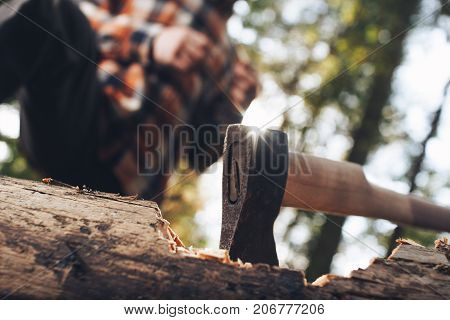 Ax Close-up In Felled Tree In Forest, Logger In Background