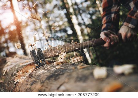 Woodcutter In Shirt Chops Tree In Wood With Sharp Ax, Chips Scatter In Different Directions. Sunligh